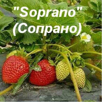 Сопрано